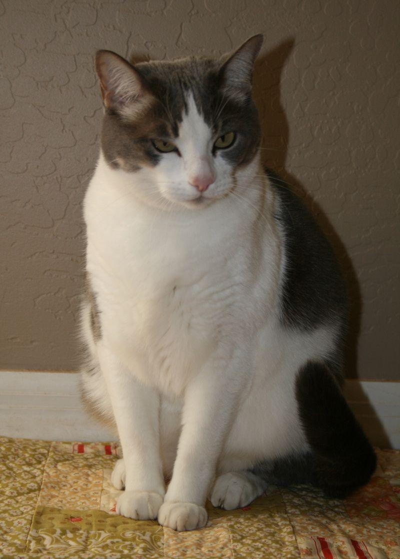 Cat jan 2010 001